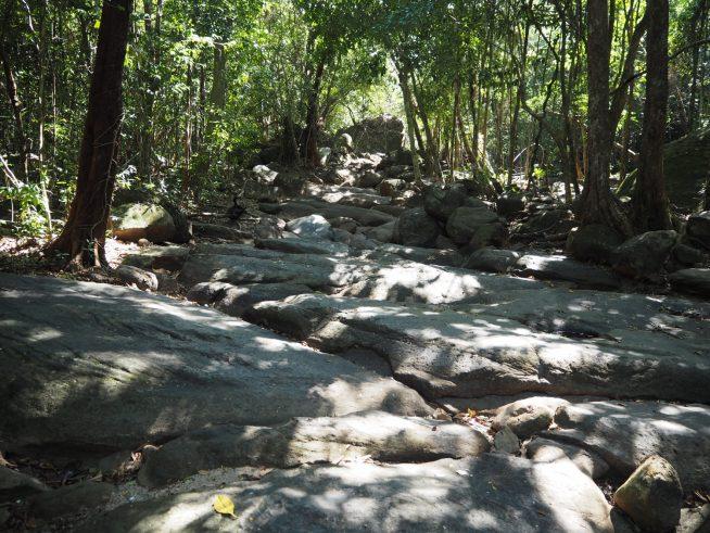 水量の多いときは川となりますが、今回は全く水がありませんでした。