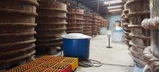 フーコックの特産品、ヌックマム工場へ行ってきました。