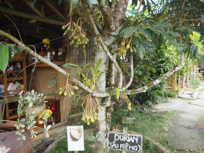 フーコックの蜂蜜農場にあったドリアンの木