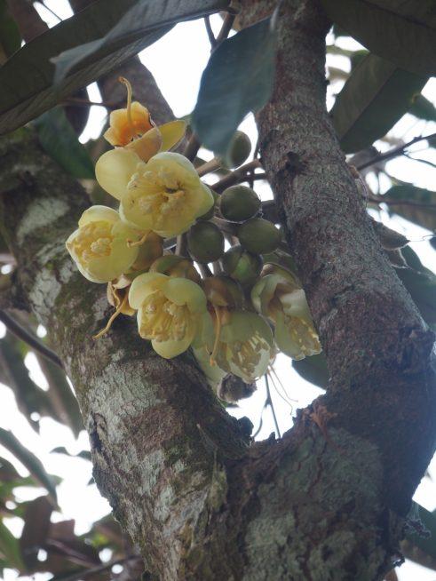 直径1.5cm程の白い花が密集して咲いていました。