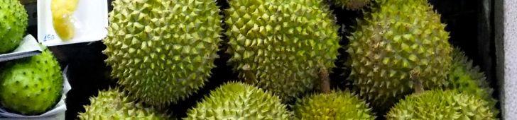 果物の王様「ドリアン」の木と、美味しいドリアンの選び方をご紹介!