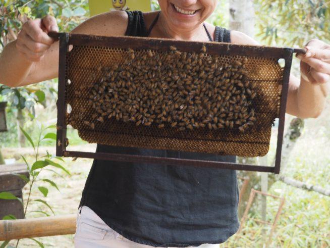蜂さんがびっしり。きれいな素を作っていました。