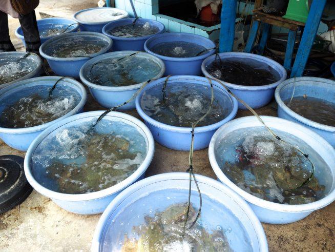たくさんの種類の魚介がタライの中で元気に泳いでいました。