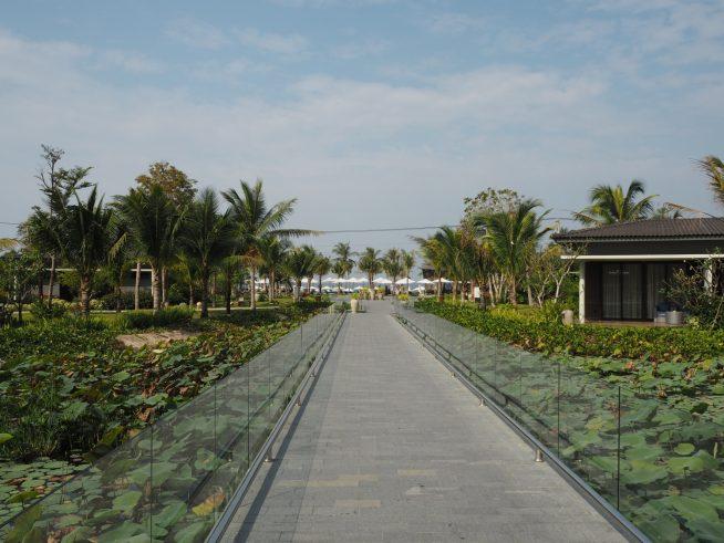 海に続く歩道。両側には蓮の池が広がっています。