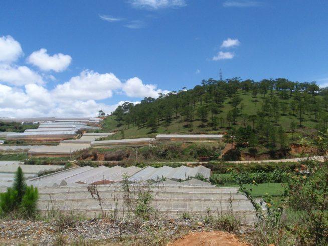 ベトナムダラットの農場