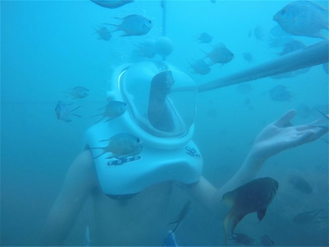 海の中で魚と触れ合うことができます