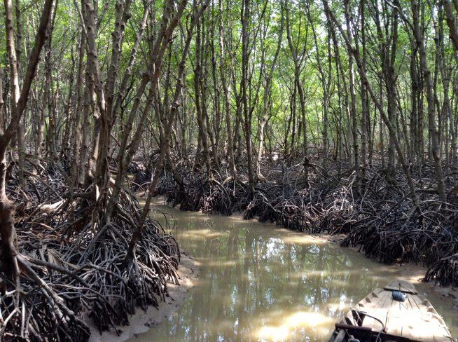 マングローブ林の中をモーターボートで突き進む