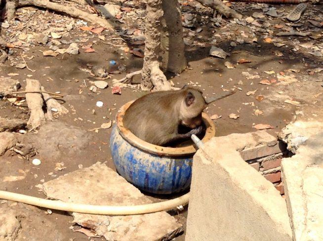 水の溜まった鉢の中に入ってリラックス中