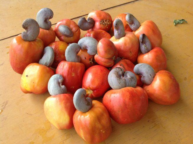 赤い果実の部分が「カシューアップル」、種子が「カシューナッツ」