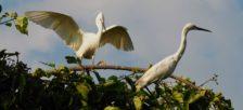 野鳥の群衆に圧巻!!カントー郊外にガイドブックにも載っていない野鳥生息地があった。