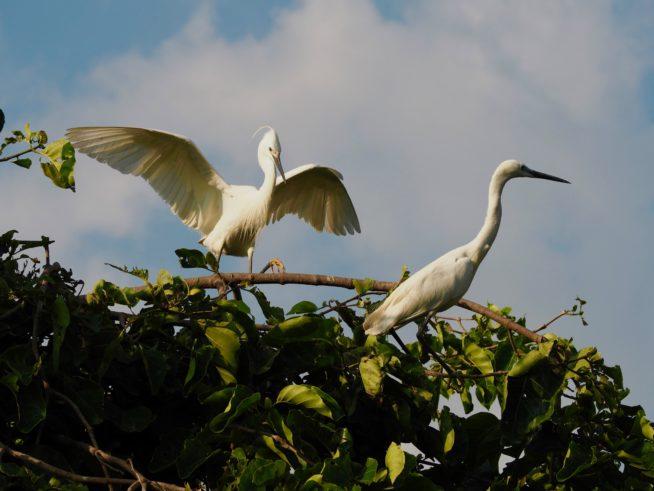 いろいろな種類の鳥たち