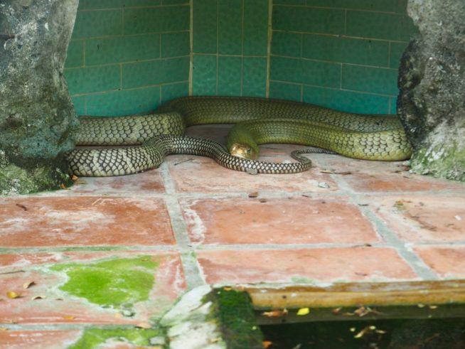 立派な蛇さんがたくさん