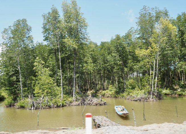 保全されたマングローブの林