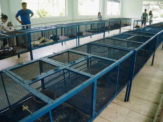 大きい蛇は室内で飼育されている